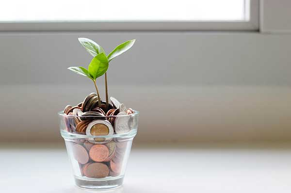 concept photo of coins with a sprout growing from them